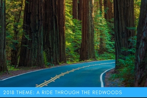 thumbnail image for blog post: 2018 Theme: A Ride Through the Redwood Forest